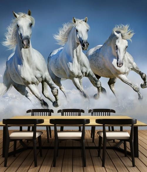 162 Arabian Horses