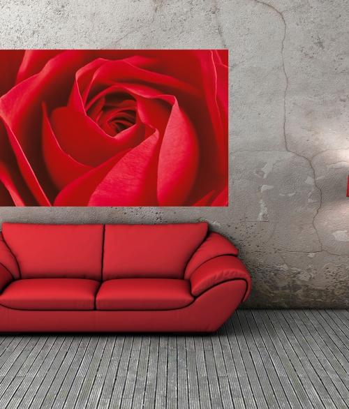 680 L'important c'est la Rose