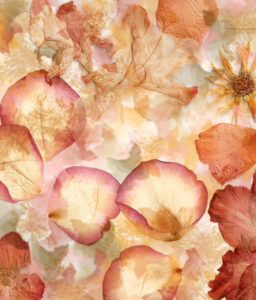 963 Dried flowers