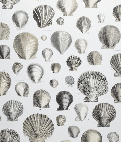 Tapet Captain Thomas Brown's Shells Grey