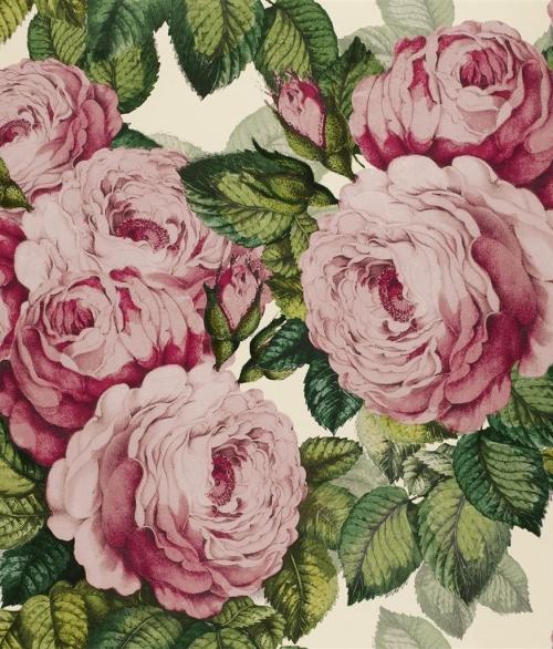 Tapet The Rose Lyserød