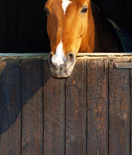 Door Horse-001