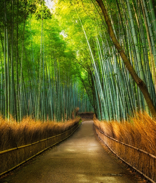 Giant Bamboo-001