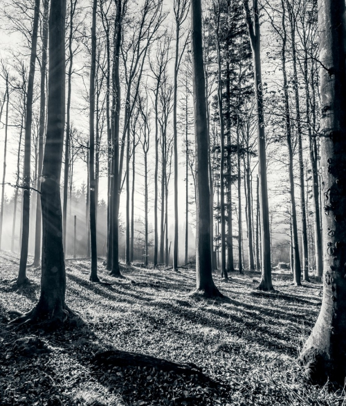 Giant Forest-004