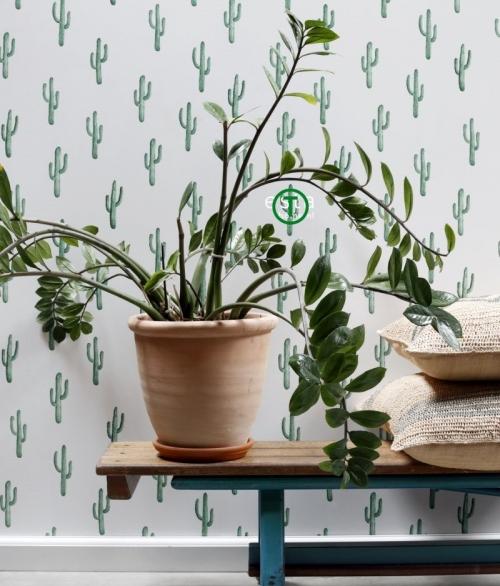 Tapet 138898 - Små Kaktus