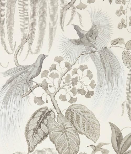 Tapet Bird Of Paradise 216652
