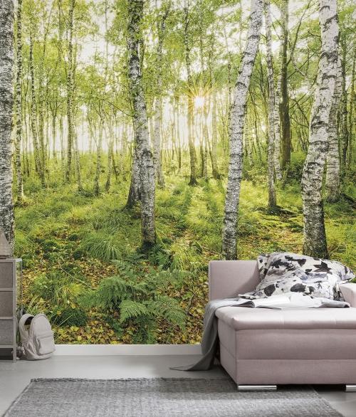 Fototapet Birch Trees